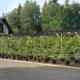 Tvarované stromy - podzimní prodejní akce