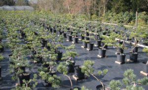 Stromy pro dopěstování s cenou od 1.500 Kč!