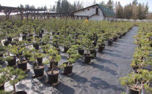 Část kolekce určená pro pěstitele bonsají